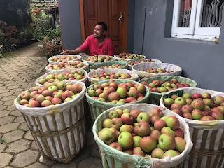 Jual Apel Malang Di Jogja Kualitas Super Langsung Dari Petani 0813.5839.7862