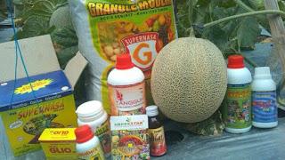 Cara Meningkatkan Hasil Panen Budidaya  Pertanian dengan nasa