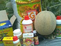 Cara Meningkatkan Hasil Panen Budidaya  Pertanian