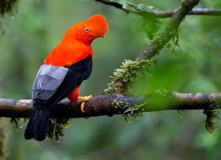 Aves nacionais de todo o mundo