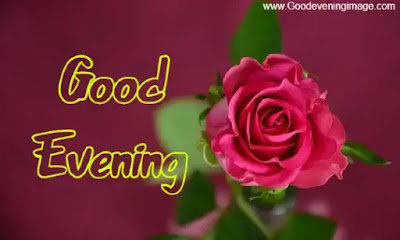 Good Evening Rose Pictures