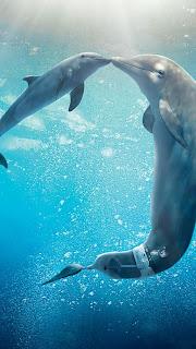 Dolphin Tale 2 Mobile HD Wallpaper