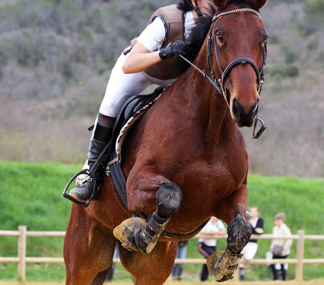celui qui a tout changé - équitation - confiance