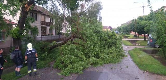 Kidőlt fák, elárasztott pincék a vihar után – sok dolguk volt a hajdú-bihari tűzoltóknak