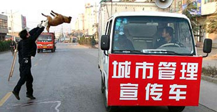 Akibat Rabies, Ribuan Anjing Dibantai di Cina