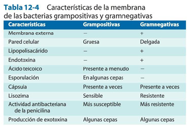 Tabla grampositivas vs gramnegativas Microbiologia murray 7ma ed