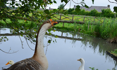 Overnight Stay at South Causey Inn | County Durham - Animals Geese