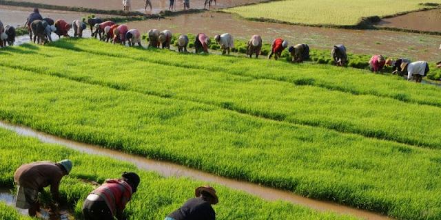 MADAGASCAR: The World Bank grants $40 million for irrigation development