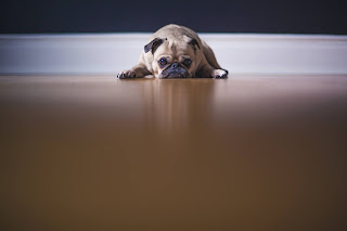 dog laying on floor as if apologizing