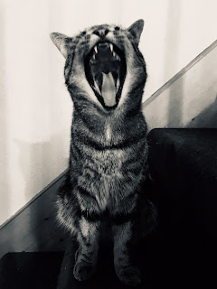 A black and white photo of a cat yowling