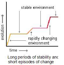 Punctuated Equilibrium