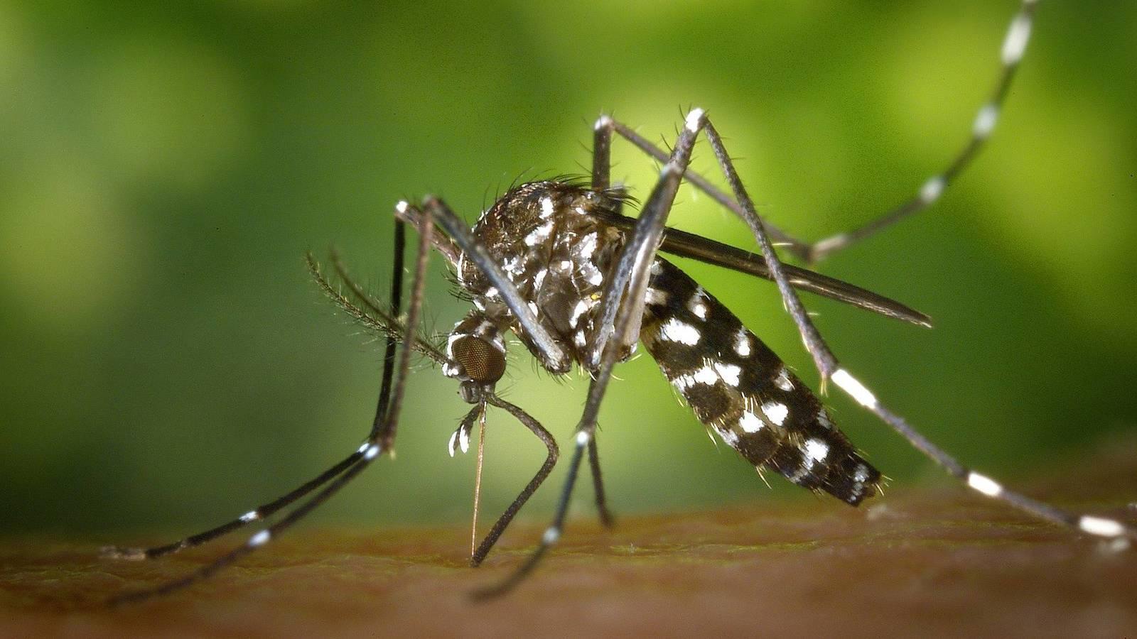 ¿Cómo evitar los mosquitos en tu hogar?