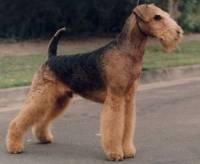 cães perna longas