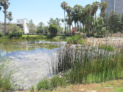 La Brea Tar Pits in Los Angeles, CA