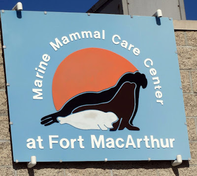 Marine Mammal Care Center (MMCC) by Stacey Kuhns