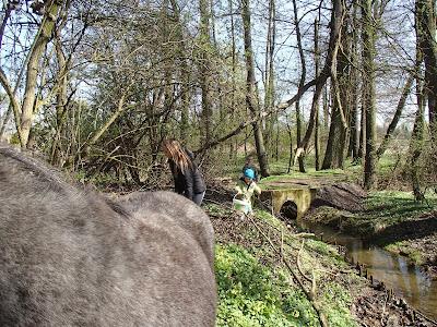konie, praca z koniem, ślimaki, szczypiorek, Auricularia auricula-judae uszak bzowy