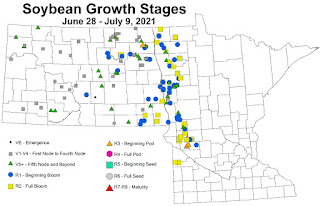 North Dakota and Minnesota map showing growth stages of soybeans in scouted fields.