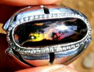 cara merawat black opal