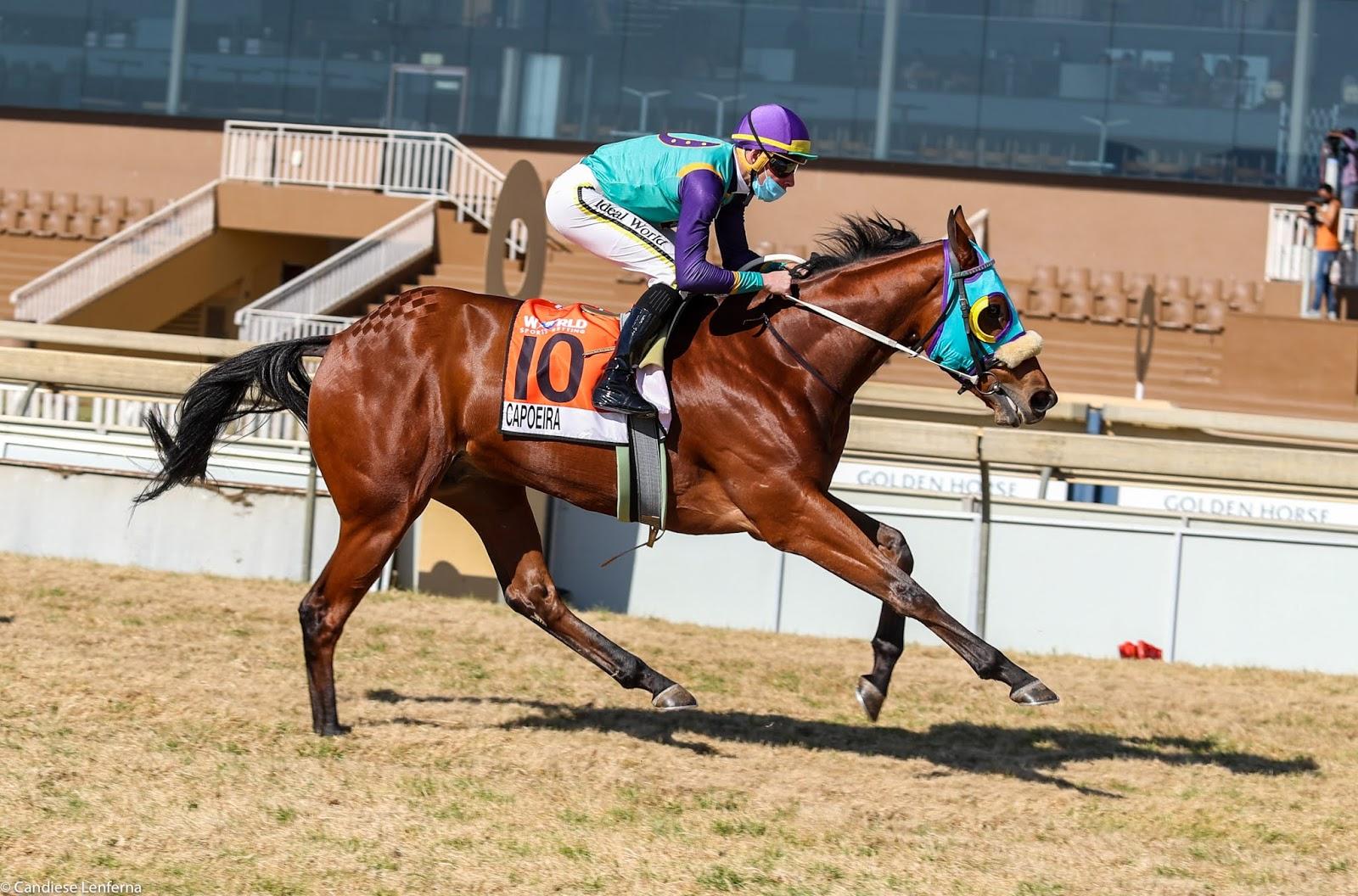 Vodacom Durban July 2020 Horse Profile - Capoeira