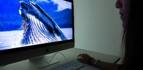Baleia Azul: Menino de 15 anos fez 49 cortes no corpo e sacrificou gato