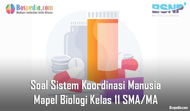 Soal Sistem Koordinasi Manusia Mapel Biologi Kelas 11 SMA/MA