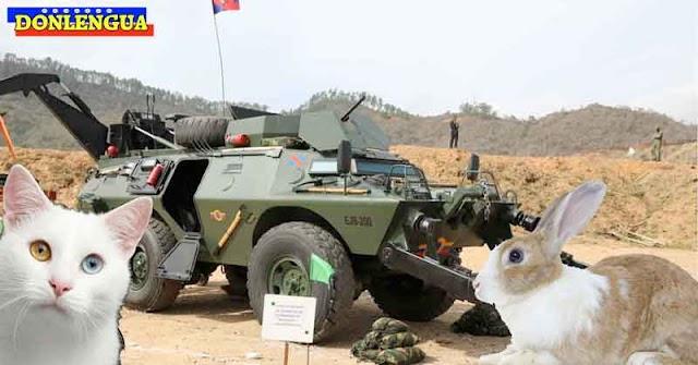 Ministerio de la Defensa planea soltar gatos y conejos en Apure para eliminar las minas anti-personales