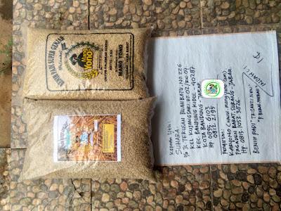 Benih padi yang dibeli   SUHARA Bandung, Jabar.    (Sebelum packing karung).