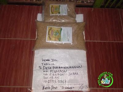 Benih pesanan TARKIA Cirebon, Jabar   (Sebelum Packing)