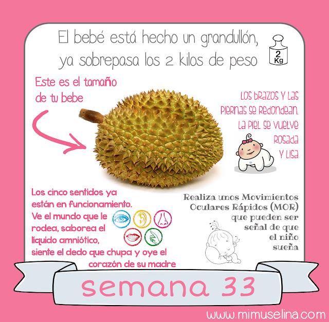 libro diario album embarazo blog mimuselina semana 33 comparacion feto frutas semana a semana