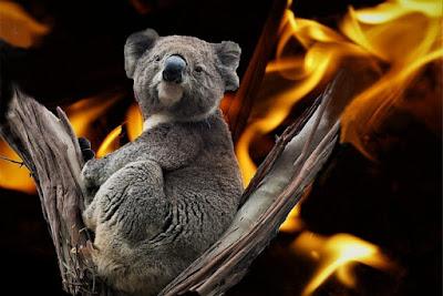 Koala Australian Bushfires
