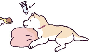alimentação e medicação elevada em cães
