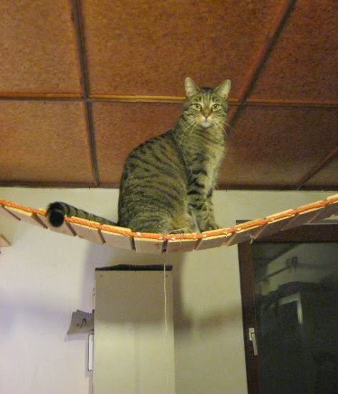 Hervorragend Puzzle(d)head: Katzen Kletterpark- selber bauen BN96