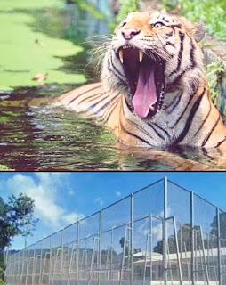Cerita dari Lipis Harimau