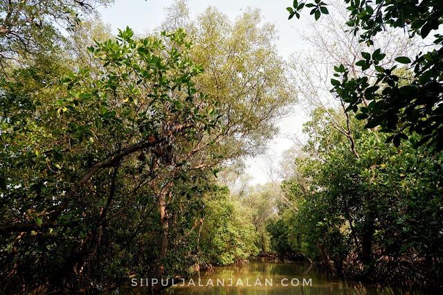 View hutan mangrove di Muaragembong