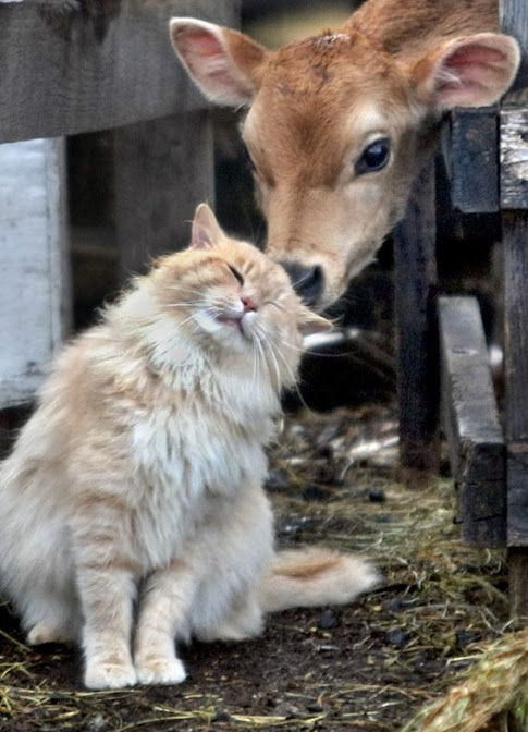Rescued shelter cats suited to a barn cat life