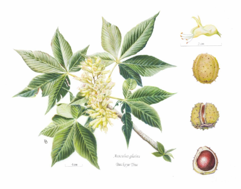 Rocky Mountain Society of Botanical Artists: 2013