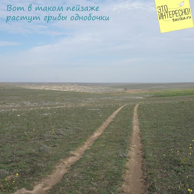 степь у Донузлава