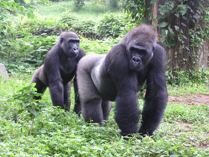Wisata Indonesia Dan Dunia Taman Marga Satwa Ragunan Jakarta Wisata Terbaik Untuk Keluarga