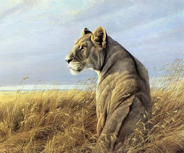 शेर के बारे में जानकारी दीजिए   शेर के फोटो वॉलपेपर डाउनलोड