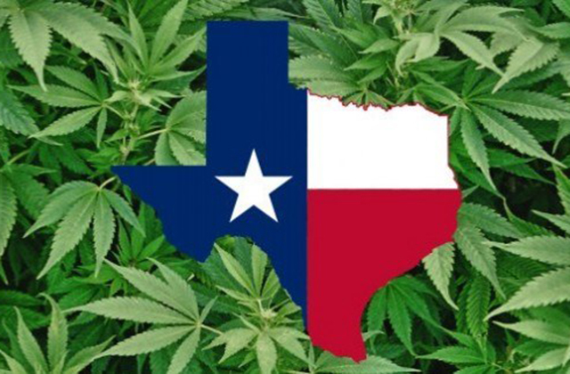 Texas A&M AgriLife creates team to answer hemp questions