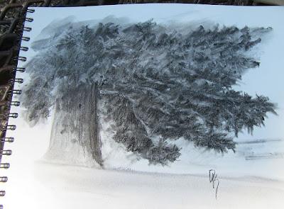 evergreen tree nature art sketch