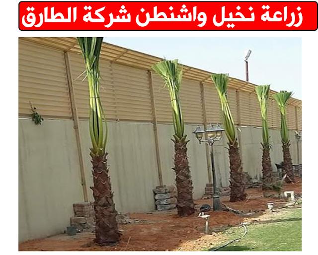 شركة زراعة نخيل في جدة زراعة نخيل واشنطونيا في جدة