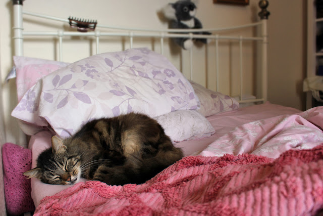 The Butterfly Balcony: Wendy's Week - Spring Bulbs & Buns - Beau cat sleeping on an unmade bed