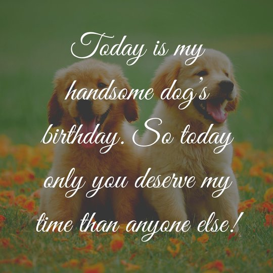 Best Birthday Wishes for Dogs