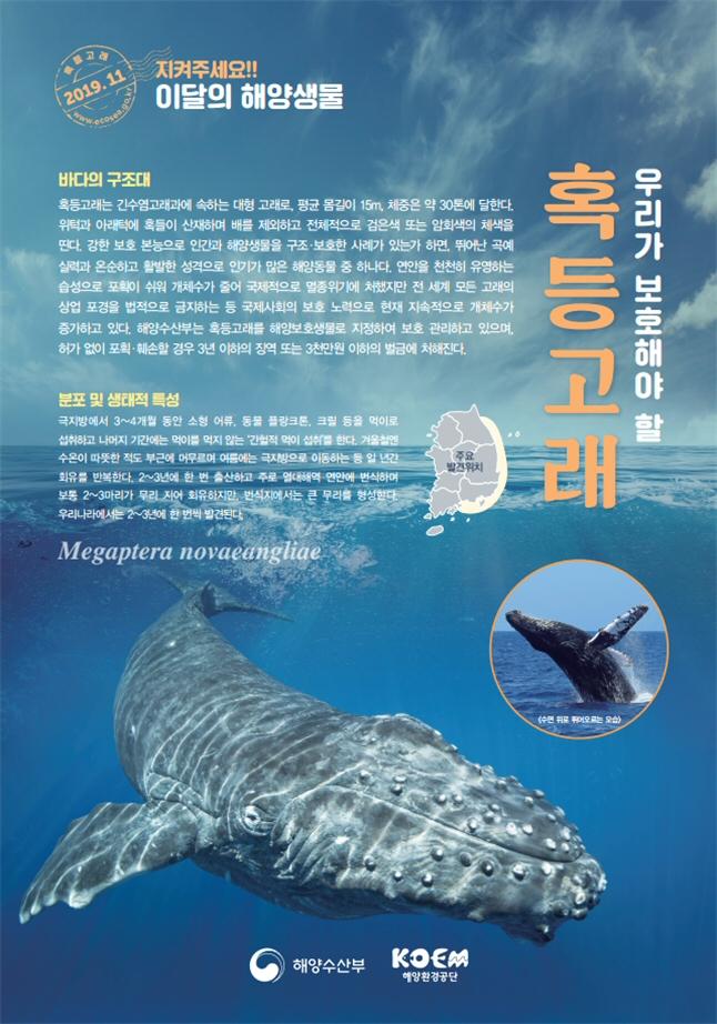 해양수산부, 2019년 11월의 해양생물로 '혹등고래' 선정