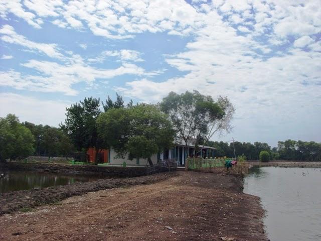 ekowisata mangrove tujuan masjid Alam Blacan