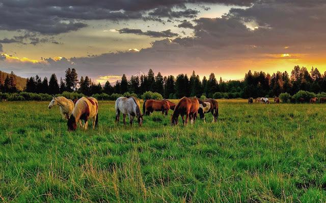 Groep paarden in het weiland