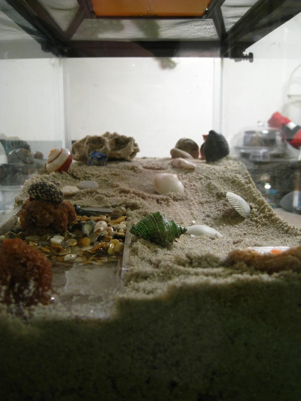 Happily Ever Crafter Hermit Crabitat