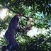 Bombeiros do 8°GBM resgatam coruja presa em linha de pipa em Jequié (BA)