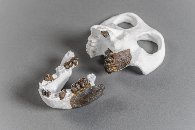 New human ancestor discovered in Europe